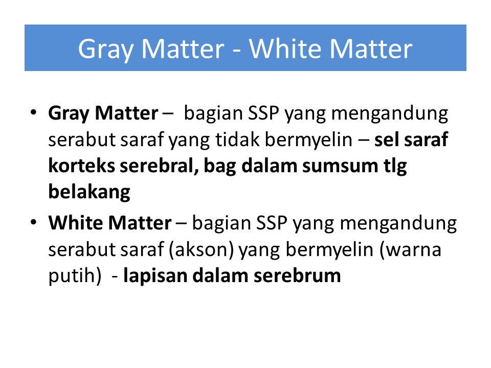 Gray Matter - White Matter Gray Matter – bagian SSP yang mengandung serabut saraf yang tidak bermyelin – sel saraf korteks serebral, bag dalam sumsum