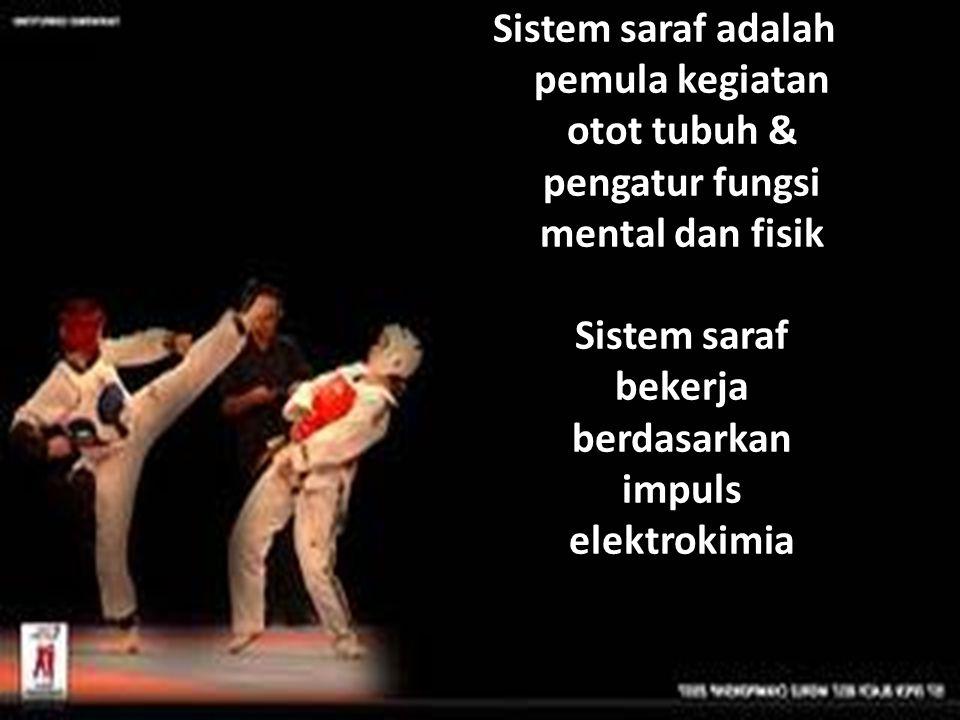 Sistem saraf adalah pemula kegiatan otot tubuh & pengatur fungsi mental dan fisik Sistem saraf bekerja berdasarkan impuls elektrokimia