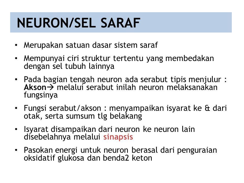 NEURON/SEL SARAF Merupakan satuan dasar sistem saraf Mempunyai ciri struktur tertentu yang membedakan dengan sel tubuh lainnya Pada bagian tengah neur