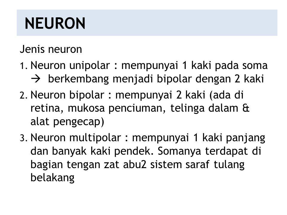 NEURON Jenis neuron 1. Neuron unipolar : mempunyai 1 kaki pada soma  berkembang menjadi bipolar dengan 2 kaki 2. Neuron bipolar : mempunyai 2 kaki (a