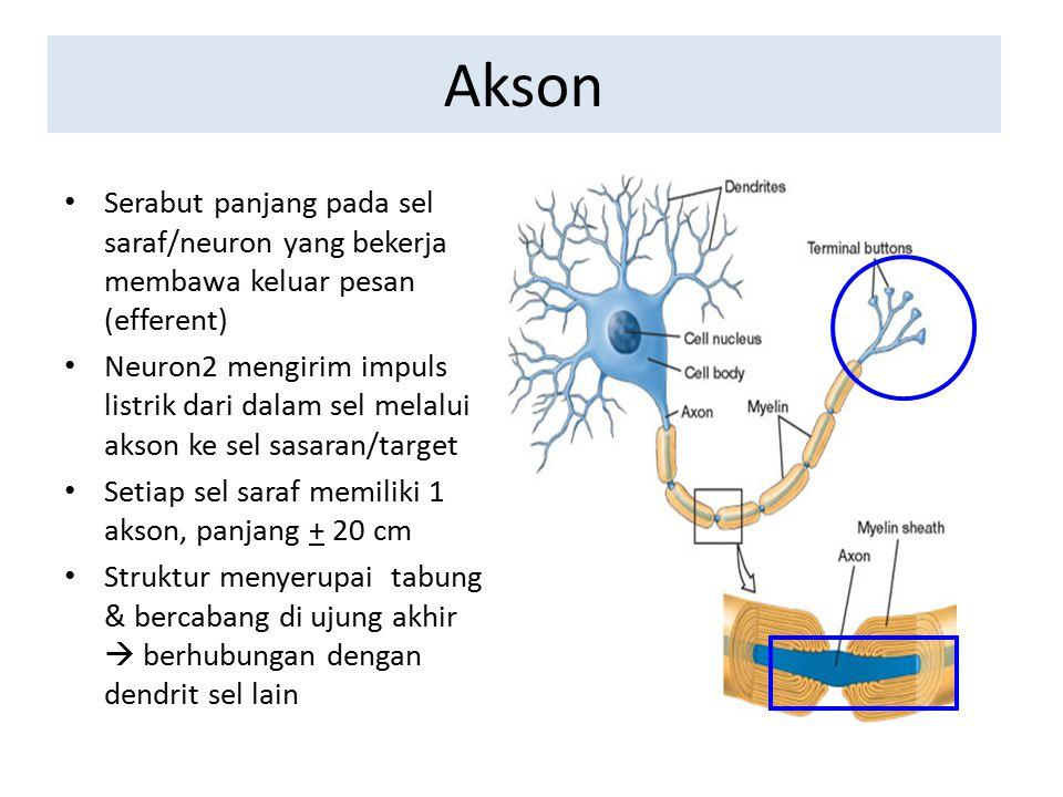 Akson Serabut panjang pada sel saraf/neuron yang bekerja membawa keluar pesan (efferent) Neuron2 mengirim impuls listrik dari dalam sel melalui akson