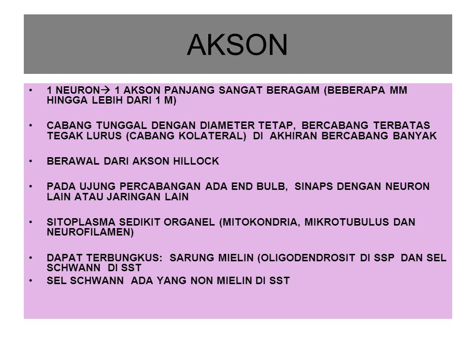 AKSON 1 NEURON  1 AKSON PANJANG SANGAT BERAGAM (BEBERAPA MM HINGGA LEBIH DARI 1 M) CABANG TUNGGAL DENGAN DIAMETER TETAP, BERCABANG TERBATAS TEGAK LURUS (CABANG KOLATERAL) DI AKHIRAN BERCABANG BANYAK BERAWAL DARI AKSON HILLOCK PADA UJUNG PERCABANGAN ADA END BULB, SINAPS DENGAN NEURON LAIN ATAU JARINGAN LAIN SITOPLASMA SEDIKIT ORGANEL (MITOKONDRIA, MIKROTUBULUS DAN NEUROFILAMEN) DAPAT TERBUNGKUS: SARUNG MIELIN (OLIGODENDROSIT DI SSP DAN SEL SCHWANN DI SST SEL SCHWANN ADA YANG NON MIELIN DI SST