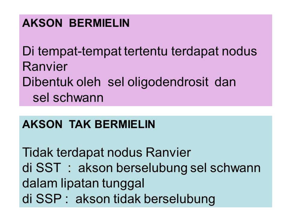 AKSON BERMIELIN Di tempat-tempat tertentu terdapat nodus Ranvier Dibentuk oleh sel oligodendrosit dan sel schwann AKSON TAK BERMIELIN Tidak terdapat nodus Ranvier di SST : akson berselubung sel schwann dalam lipatan tunggal di SSP : akson tidak berselubung