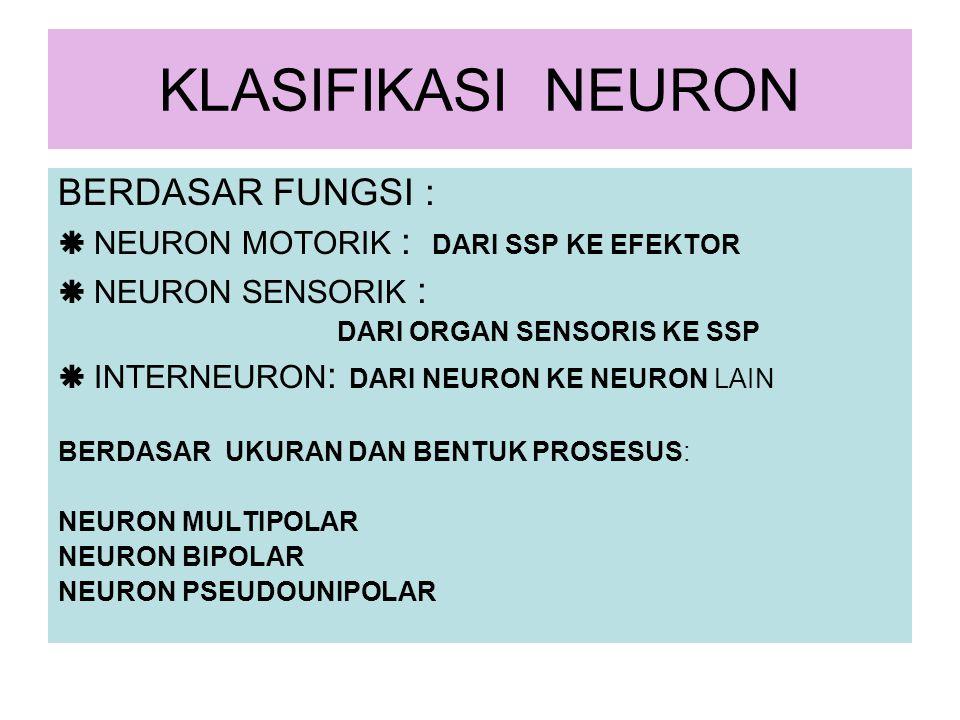 KLASIFIKASI NEURON BERDASAR FUNGSI :  NEURON MOTORIK : DARI SSP KE EFEKTOR  NEURON SENSORIK : DARI ORGAN SENSORIS KE SSP  INTERNEURON : DARI NEURON