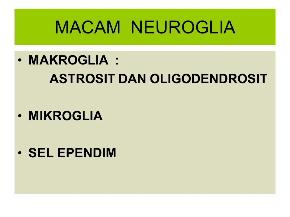 MACAM NEUROGLIA MAKROGLIA : ASTROSIT DAN OLIGODENDROSIT MIKROGLIA SEL EPENDIM