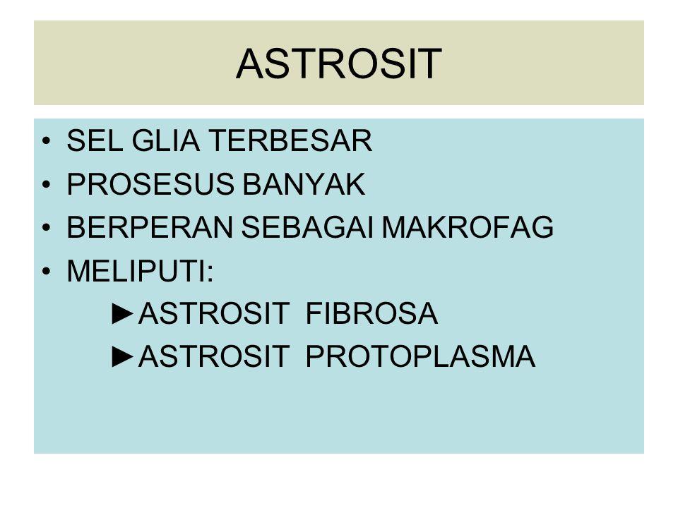 ASTROSIT SEL GLIA TERBESAR PROSESUS BANYAK BERPERAN SEBAGAI MAKROFAG MELIPUTI: ► ASTROSIT FIBROSA ► ASTROSIT PROTOPLASMA