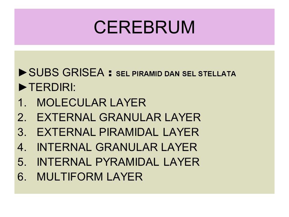 CEREBRUM ► SUBS GRISEA : SEL PIRAMID DAN SEL STELLATA ► TERDIRI: 1.MOLECULAR LAYER 2.EXTERNAL GRANULAR LAYER 3.EXTERNAL PIRAMIDAL LAYER 4.INTERNAL GRANULAR LAYER 5.INTERNAL PYRAMIDAL LAYER 6.MULTIFORM LAYER