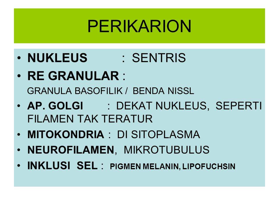 PERIKARION NUKLEUS : SENTRIS RE GRANULAR : GRANULA BASOFILIK / BENDA NISSL AP. GOLGI : DEKAT NUKLEUS, SEPERTI FILAMEN TAK TERATUR MITOKONDRIA : DI SIT
