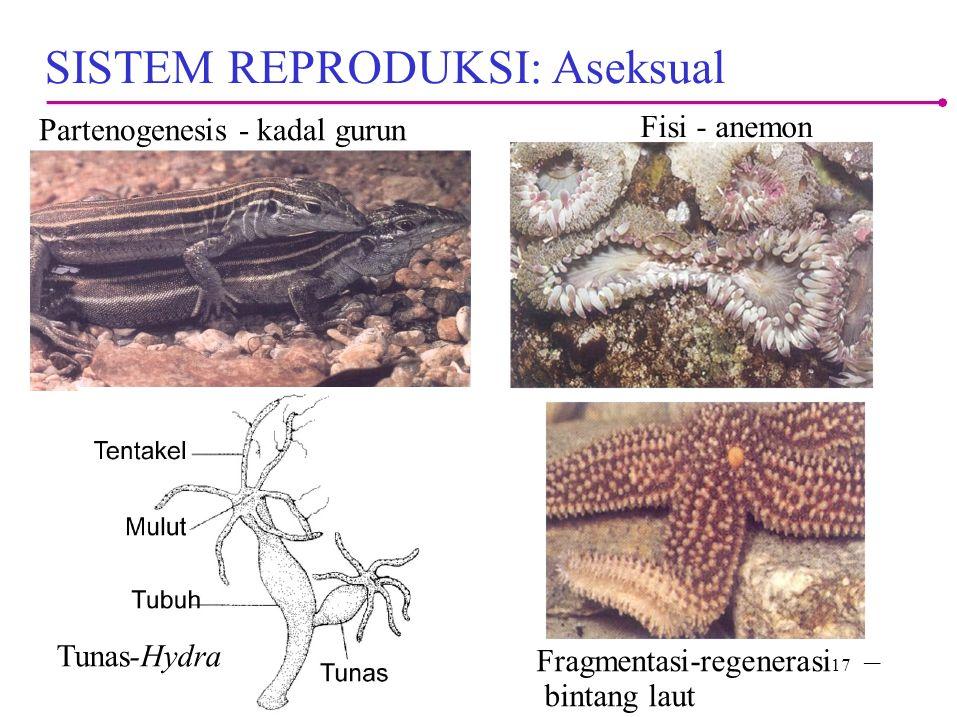 Partenogenesis - kadal gurun Fisi - anemon SISTEM REPRODUKSI: Aseksual Fragmentasi-regenerasi 17 – bintang laut Tunas-Hydra