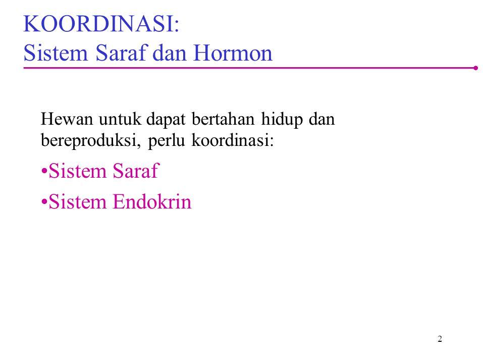 KOORDINASI: Sistem Saraf dan Hormon Hewan untuk dapat bertahan hidup dan bereproduksi, perlu koordinasi: Sistem Saraf Sistem Endokrin 2