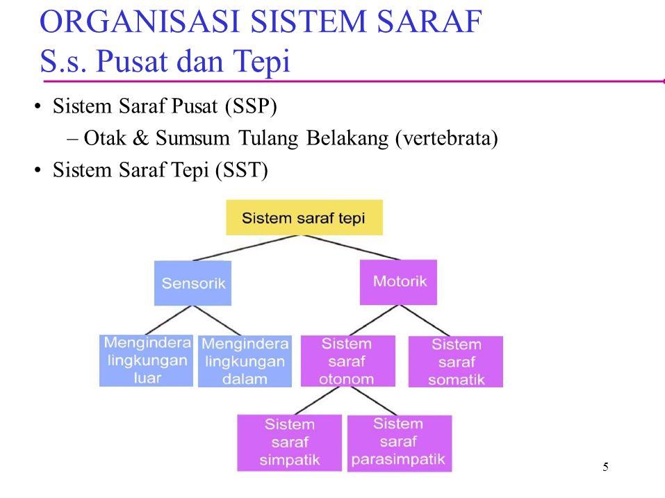 5 ORGANISASI SISTEM SARAF S.s.