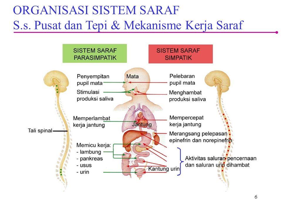 6 ORGANISASI SISTEM SARAF S.s. Pusat dan Tepi & Mekanisme Kerja Saraf