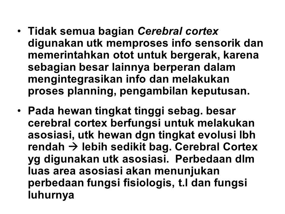Tidak semua bagian Cerebral cortex digunakan utk memproses info sensorik dan memerintahkan otot untuk bergerak, karena sebagian besar lainnya berperan