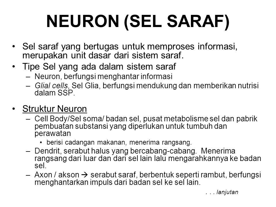 NEURON (SEL SARAF) Sel saraf yang bertugas untuk memproses informasi, merupakan unit dasar dari sistem saraf. Tipe Sel yang ada dalam sistem saraf –Ne