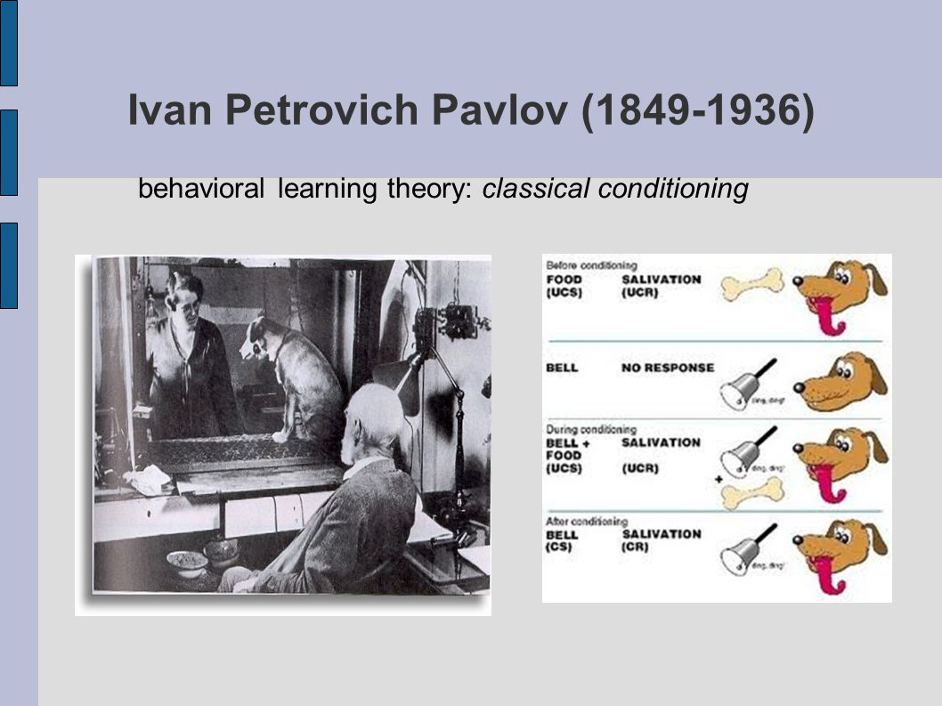 Ivan Petrovich Pavlov (1849-1936) behavioral learning theory: classical conditioning