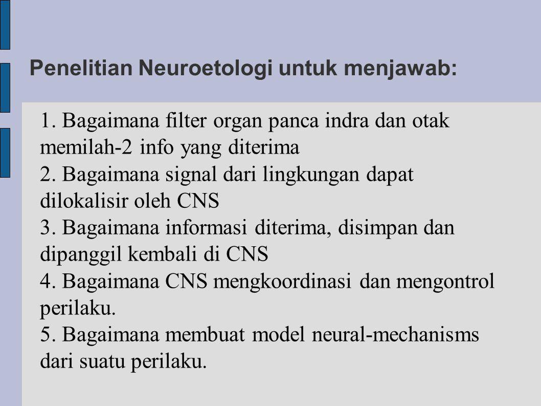 Penelitian Neuroetologi untuk menjawab: 1. Bagaimana filter organ panca indra dan otak memilah-2 info yang diterima 2. Bagaimana signal dari lingkunga