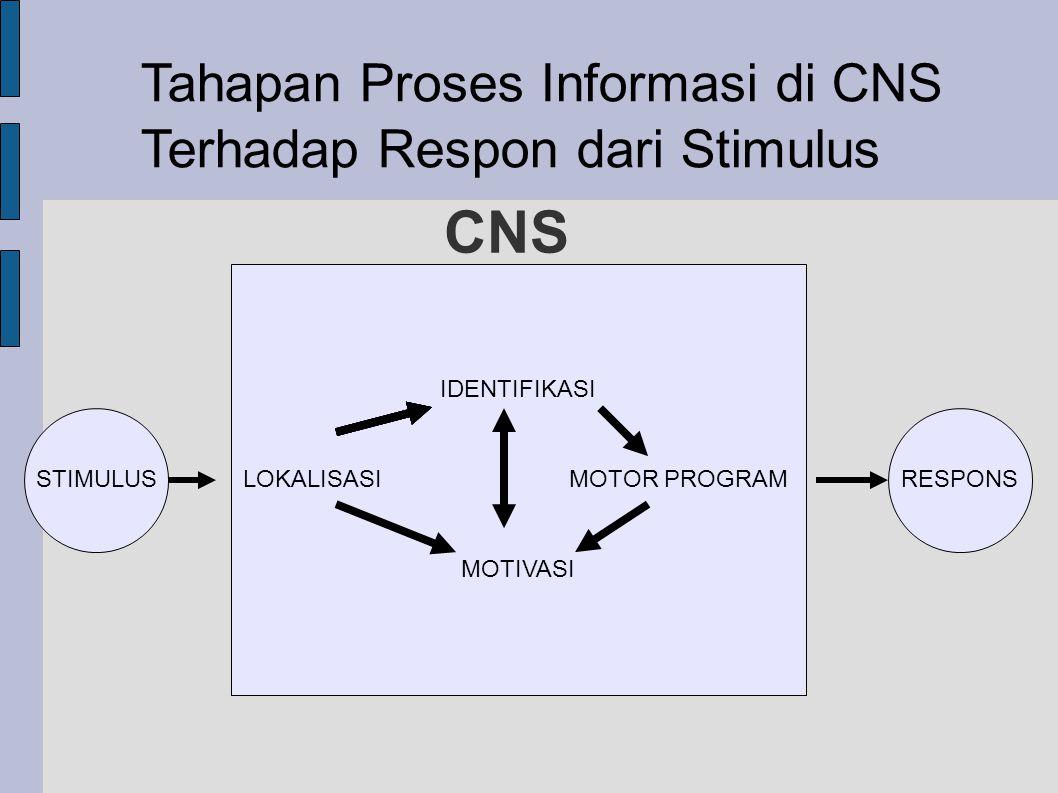 CNS IDENTIFIKASI LOKALISASI MOTOR PROGRAM MOTIVASI RESPONSSTIMULUS Tahapan Proses Informasi di CNS Terhadap Respon dari Stimulus