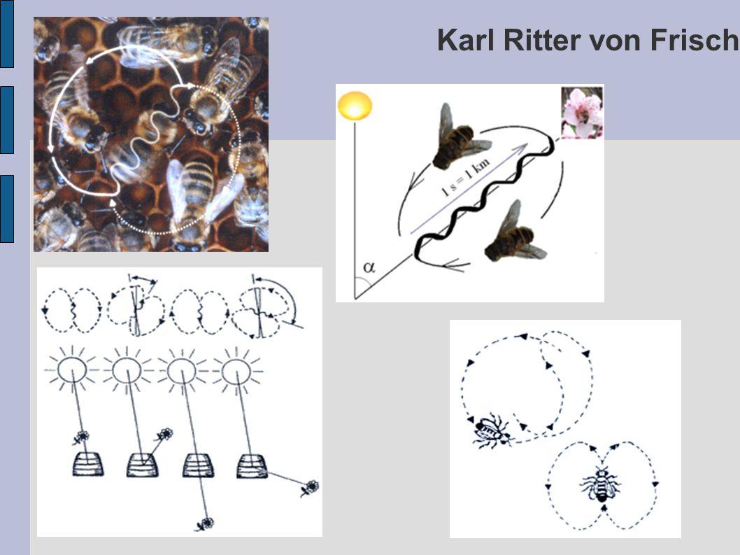 Karl Ritter von Frisch