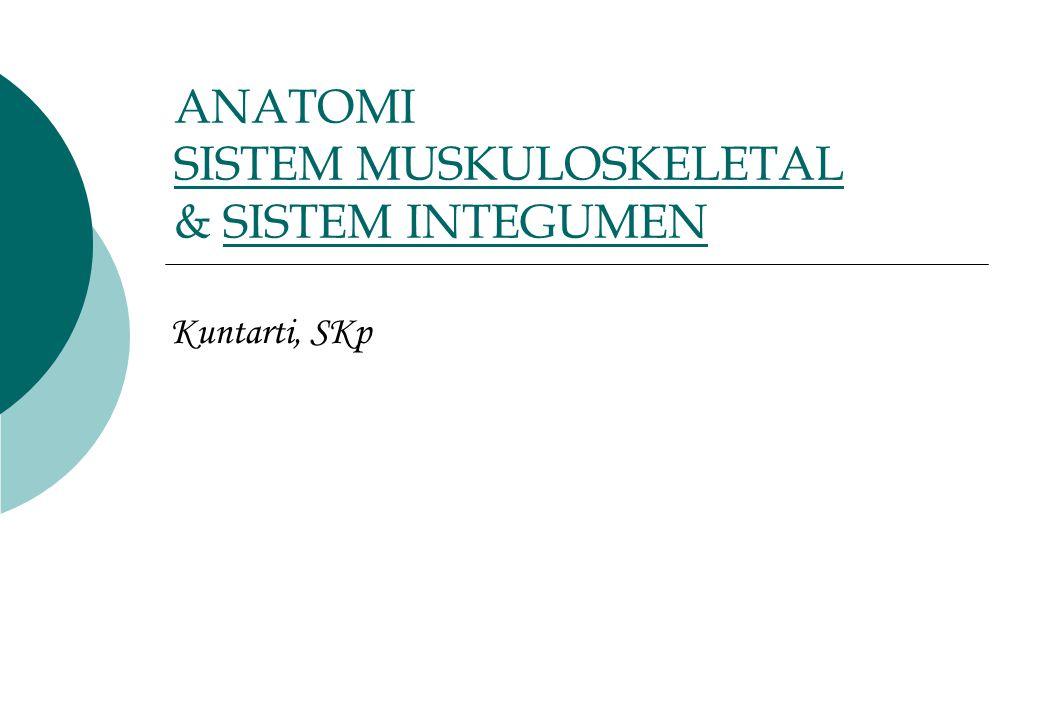 ANATOMI SISTEM MUSKULOSKELETAL & SISTEM INTEGUMEN SISTEM MUSKULOSKELETALSISTEM INTEGUMEN Kuntarti, SKp