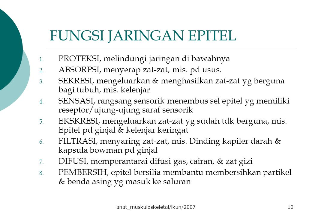 anat_muskuloskeletal/ikun/200710 FUNGSI JARINGAN EPITEL 1. PROTEKSI, melindungi jaringan di bawahnya 2. ABSORPSI, menyerap zat-zat, mis. pd usus. 3. S