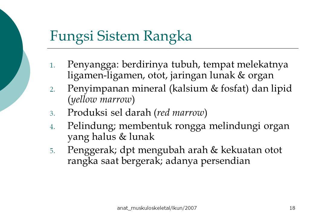 anat_muskuloskeletal/ikun/200718 Fungsi Sistem Rangka 1. Penyangga: berdirinya tubuh, tempat melekatnya ligamen-ligamen, otot, jaringan lunak & organ
