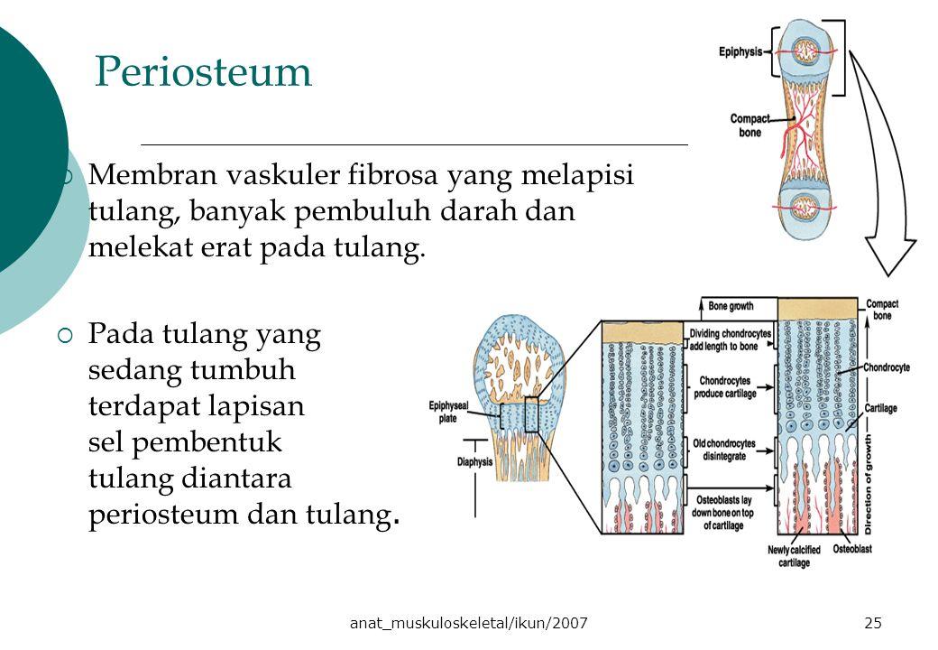 anat_muskuloskeletal/ikun/200725 Periosteum  Membran vaskuler fibrosa yang melapisi tulang, banyak pembuluh darah dan melekat erat pada tulang.  Pad