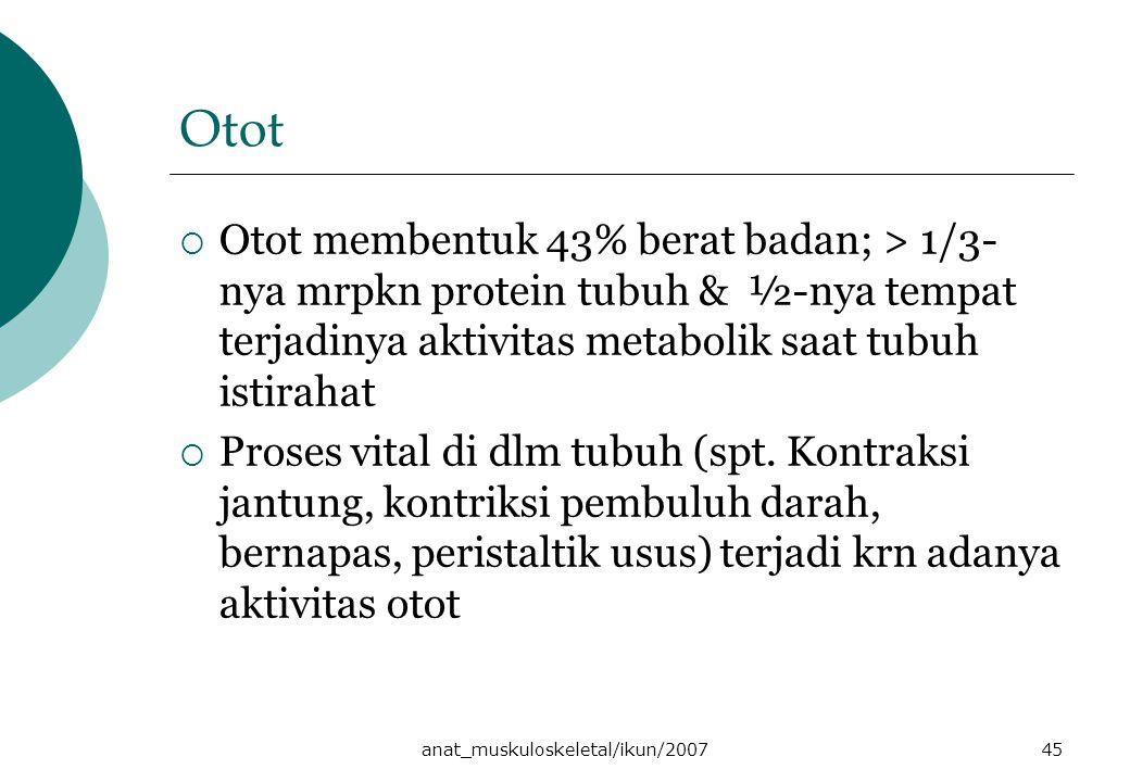 anat_muskuloskeletal/ikun/200745 Otot  Otot membentuk 43% berat badan; > 1/3- nya mrpkn protein tubuh & ½-nya tempat terjadinya aktivitas metabolik saat tubuh istirahat  Proses vital di dlm tubuh (spt.