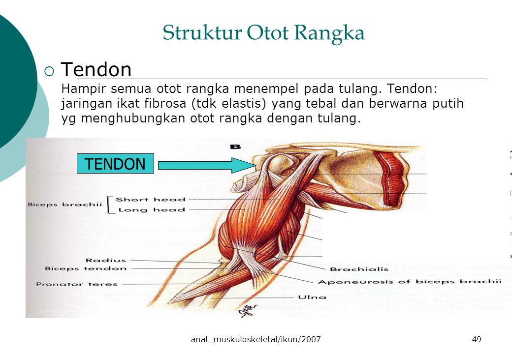 anat_muskuloskeletal/ikun/200749 Struktur Otot Rangka  Tendon Hampir semua otot rangka menempel pada tulang. Tendon: jaringan ikat fibrosa (tdk elast