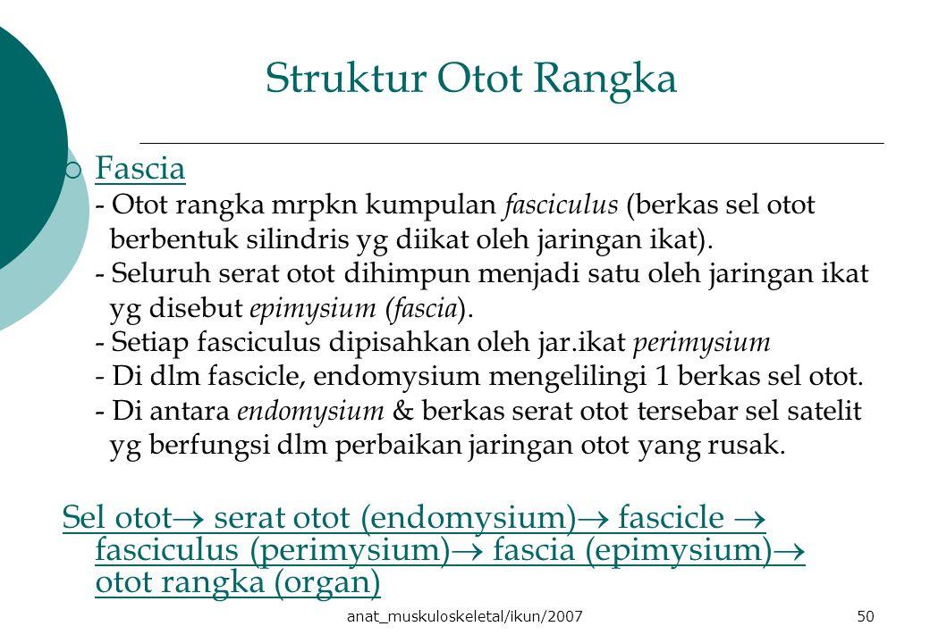 anat_muskuloskeletal/ikun/200750 Struktur Otot Rangka  Fascia - Otot rangka mrpkn kumpulan fasciculus (berkas sel otot berbentuk silindris yg diikat oleh jaringan ikat).