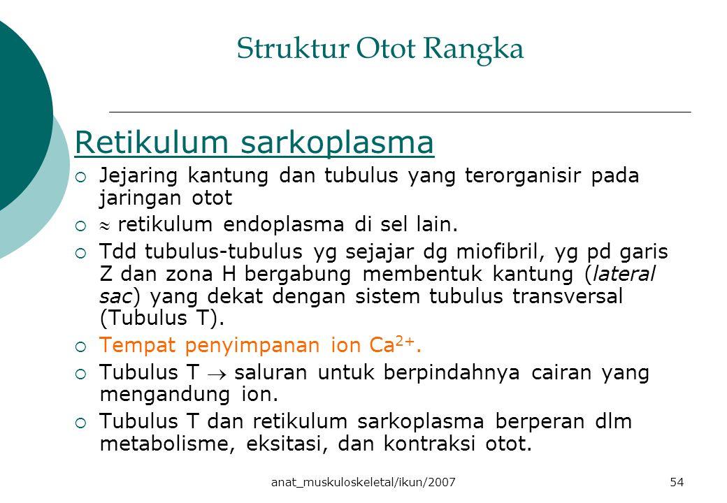 anat_muskuloskeletal/ikun/200754 Struktur Otot Rangka Retikulum sarkoplasma  Jejaring kantung dan tubulus yang terorganisir pada jaringan otot   retikulum endoplasma di sel lain.