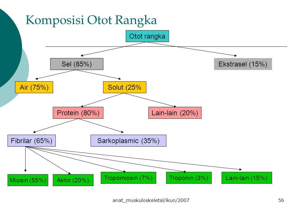 anat_muskuloskeletal/ikun/200756 Komposisi Otot Rangka Otot rangka Sel (85%)Ekstrasel (15%) Air (75%)Solut (25% Protein (80%)Lain-lain (20%) Fibrilar (65%)Sarkoplasmic (35%) Miosin (55%)Aktin (20%) Tropomiosin (7%)Troponin (3%)Lain-lain (15%)