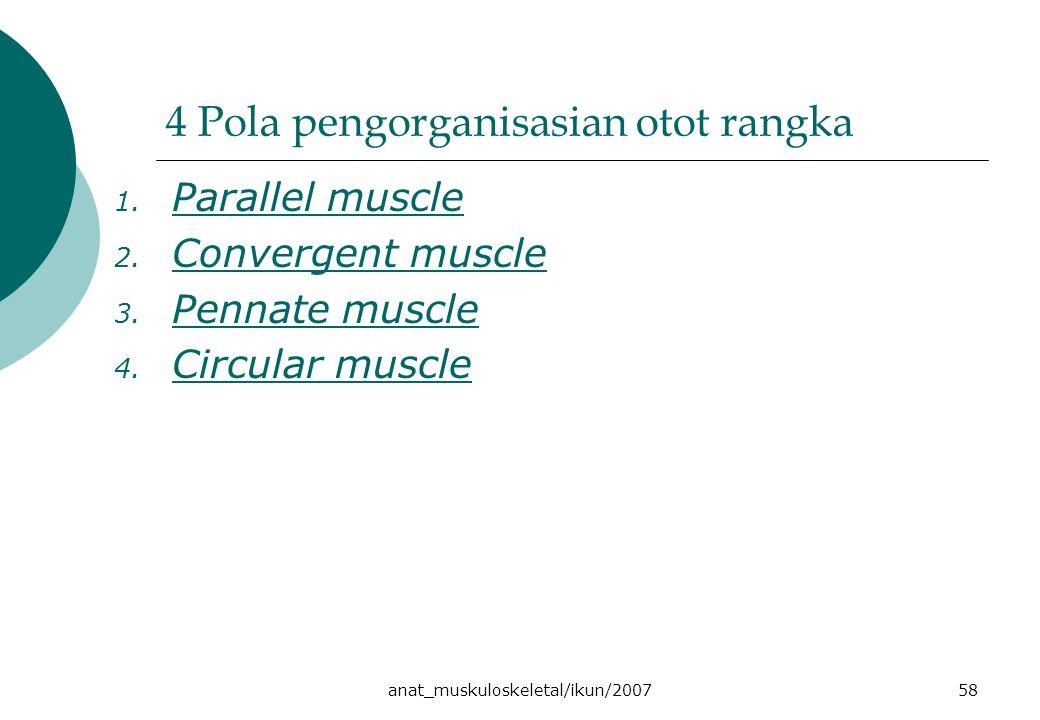 anat_muskuloskeletal/ikun/200758 4 Pola pengorganisasian otot rangka 1. Parallel muscle Parallel muscle 2. Convergent muscle Convergent muscle 3. Penn