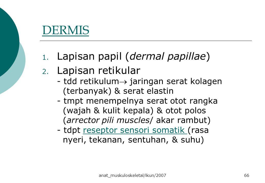 anat_muskuloskeletal/ikun/200766 DERMIS 1. Lapisan papil (dermal papillae) 2. Lapisan retikular - tdd retikulum jaringan serat kolagen (terbanyak) &