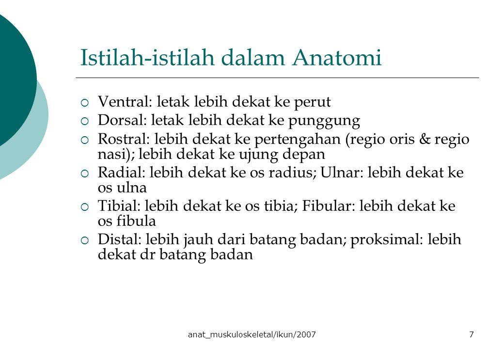 anat_muskuloskeletal/ikun/20077 Istilah-istilah dalam Anatomi  Ventral: letak lebih dekat ke perut  Dorsal: letak lebih dekat ke punggung  Rostral: