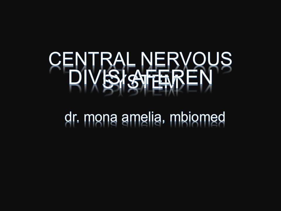Sistem penerimaan impuls melalui –Reseptor –Akson –Ganglion sensorik –Cornu posterior –Tractus spinothalamicus –Corona radiata - Cortex cerebri, gyrus post centralis –Persepsi