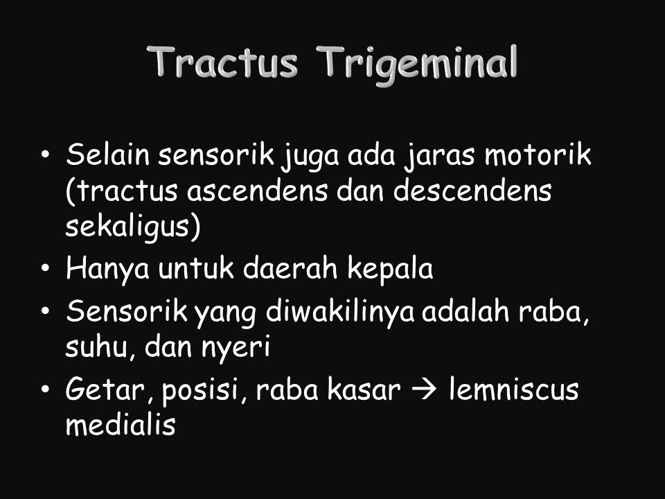 Selain sensorik juga ada jaras motorik (tractus ascendens dan descendens sekaligus) Hanya untuk daerah kepala Sensorik yang diwakilinya adalah raba, s