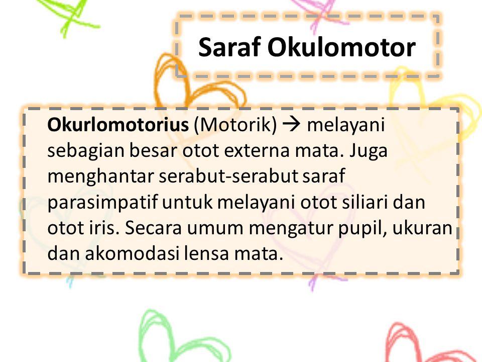 Saraf Okulomotor Okurlomotorius (Motorik)  melayani sebagian besar otot externa mata. Juga menghantar serabut-serabut saraf parasimpatif untuk melaya