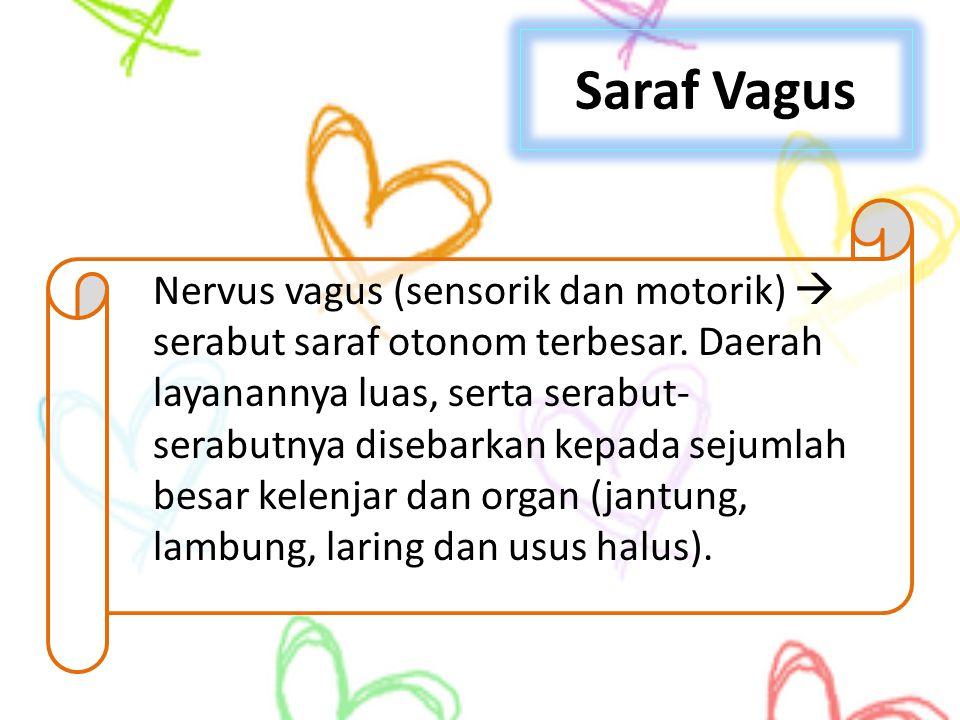 Saraf Vagus Nervus vagus (sensorik dan motorik)  serabut saraf otonom terbesar. Daerah layanannya luas, serta serabut- serabutnya disebarkan kepada s