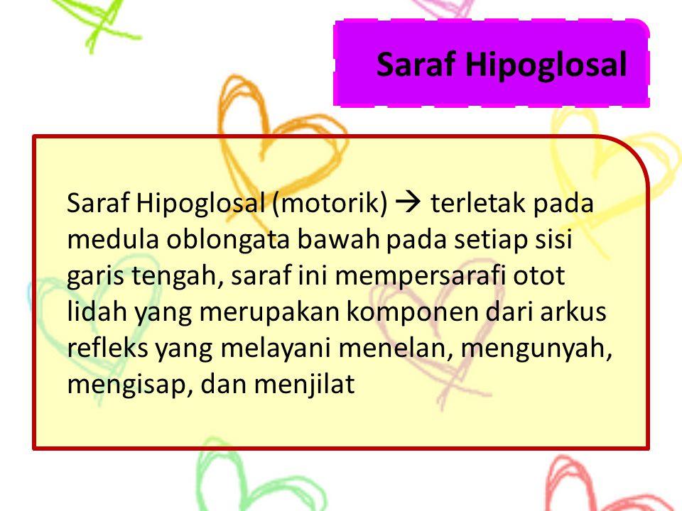 Saraf Hipoglosal Saraf Hipoglosal (motorik)  terletak pada medula oblongata bawah pada setiap sisi garis tengah, saraf ini mempersarafi otot lidah ya