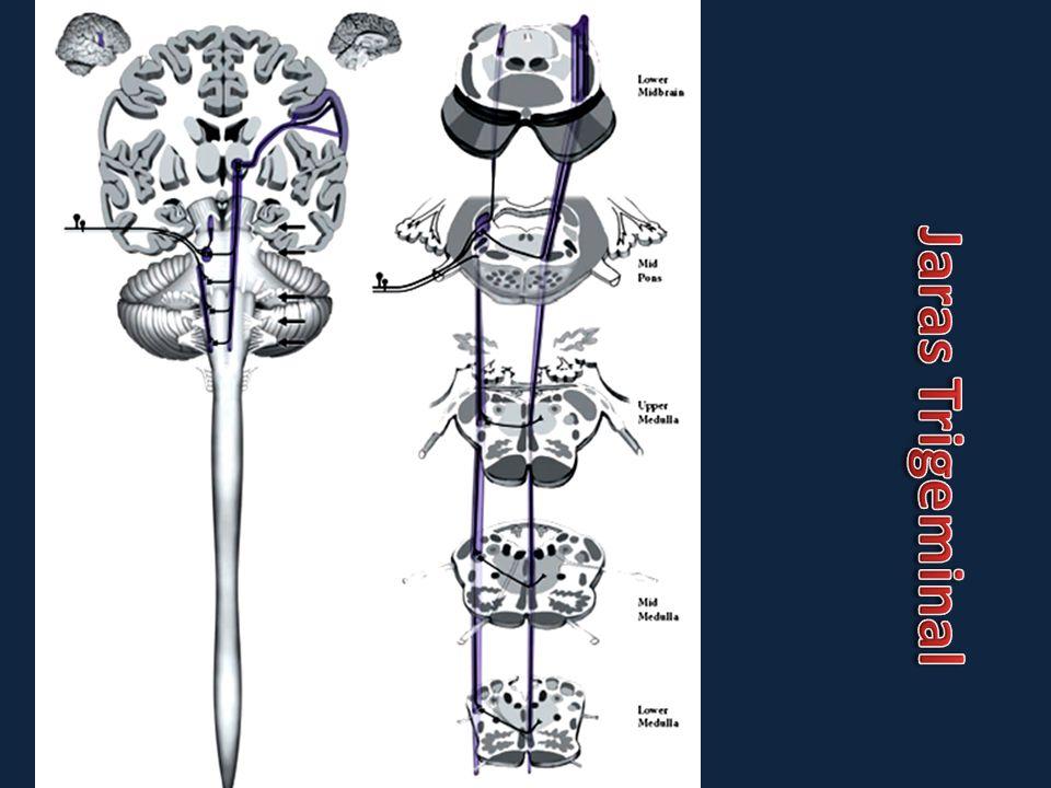 Neuralgia yang disebabkan oleh rangsangan mendadak/ paroksismal pada semua percabangan N.