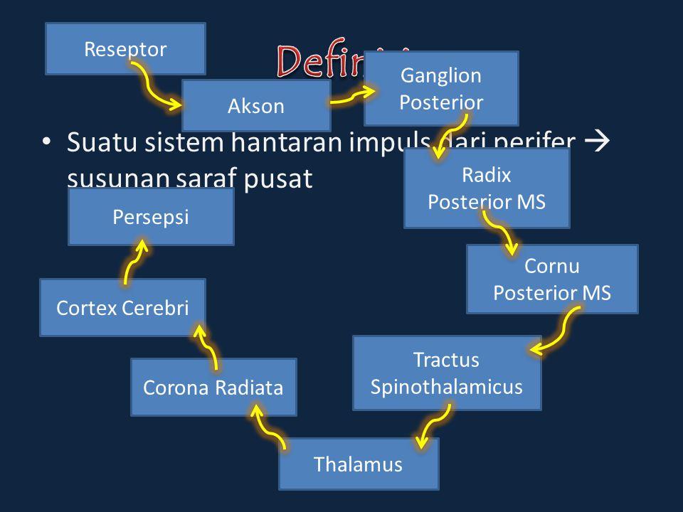 Suatu sistem hantaran impuls dari perifer  susunan saraf pusat Reseptor Akson Radix Posterior MS Cornu Posterior MS Ganglion Posterior Tractus Spinot