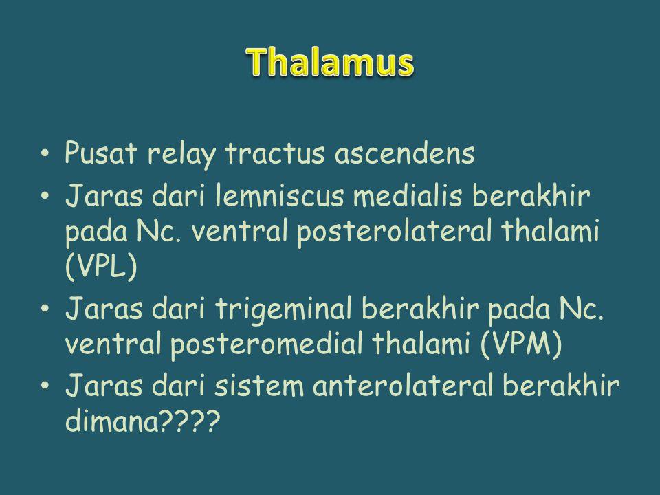 Pusat relay tractus ascendens Jaras dari lemniscus medialis berakhir pada Nc. ventral posterolateral thalami (VPL) Jaras dari trigeminal berakhir pada