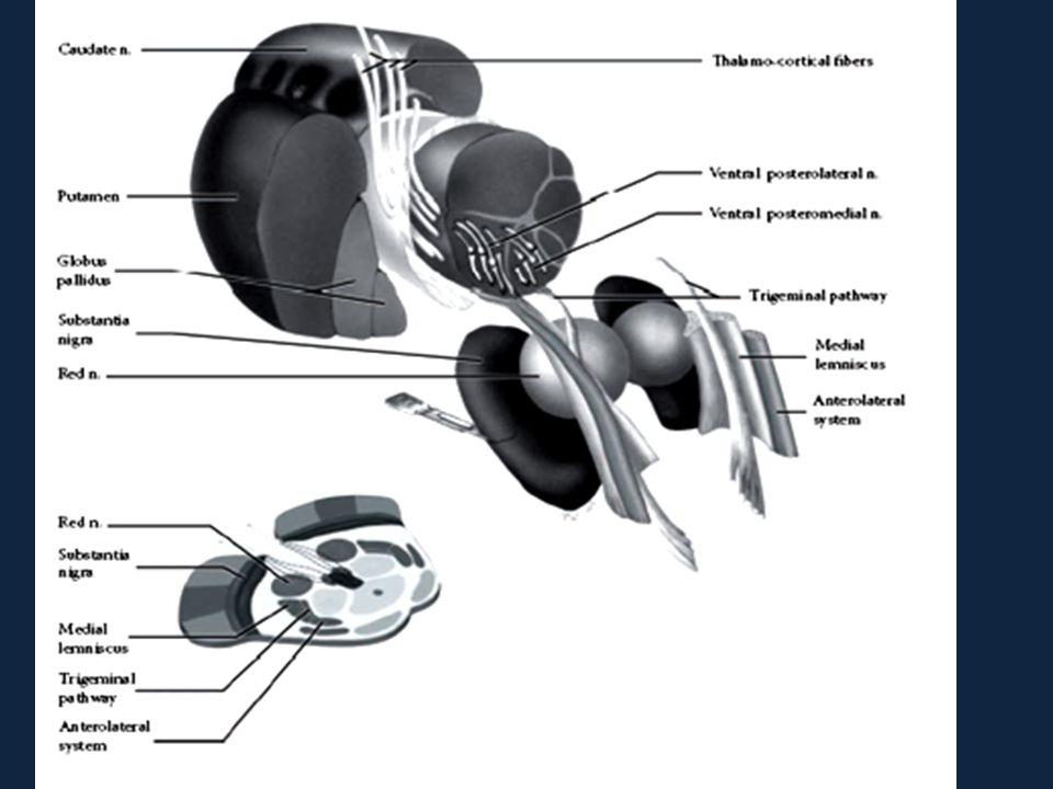 Pada thalamus  modifikasi impuls nyeri Nucleus thalami  capsula interna  corona radiata  gyrus postcentralis (homunculus cerebri), area asosiasi 1 dan 2 di lobus parietalis