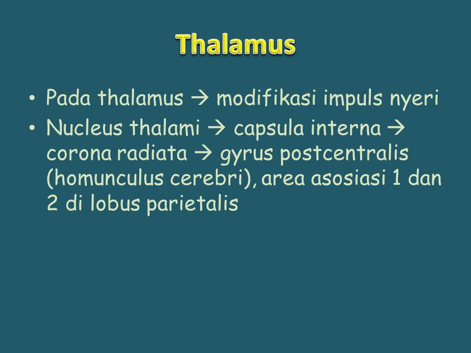 Pada thalamus  modifikasi impuls nyeri Nucleus thalami  capsula interna  corona radiata  gyrus postcentralis (homunculus cerebri), area asosiasi 1