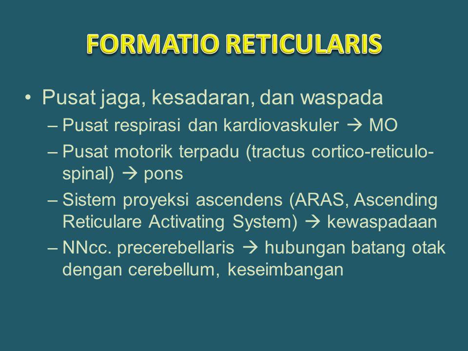 Pusat jaga, kesadaran, dan waspada –Pusat respirasi dan kardiovaskuler  MO –Pusat motorik terpadu (tractus cortico-reticulo- spinal)  pons –Sistem proyeksi ascendens (ARAS, Ascending Reticulare Activating System)  kewaspadaan –NNcc.