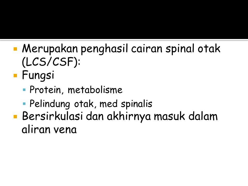  Merupakan penghasil cairan spinal otak (LCS/CSF):  Fungsi  Protein, metabolisme  Pelindung otak, med spinalis  Bersirkulasi dan akhirnya masuk dalam aliran vena Sistem Ventrikel (LCS)