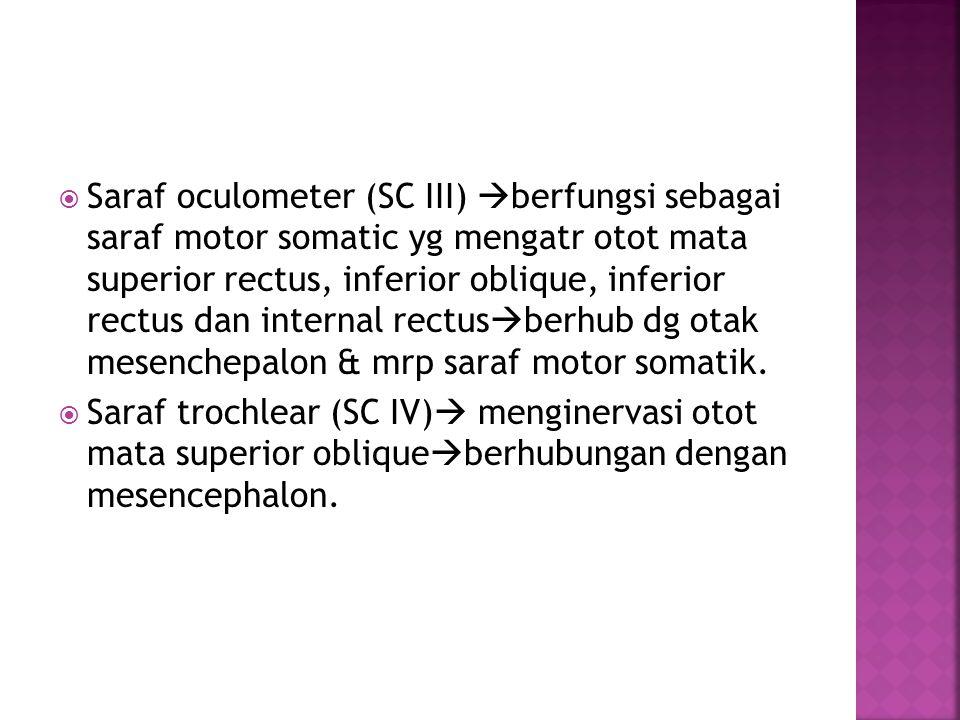  Saraf oculometer (SC III)  berfungsi sebagai saraf motor somatic yg mengatr otot mata superior rectus, inferior oblique, inferior rectus dan internal rectus  berhub dg otak mesenchepalon & mrp saraf motor somatik.