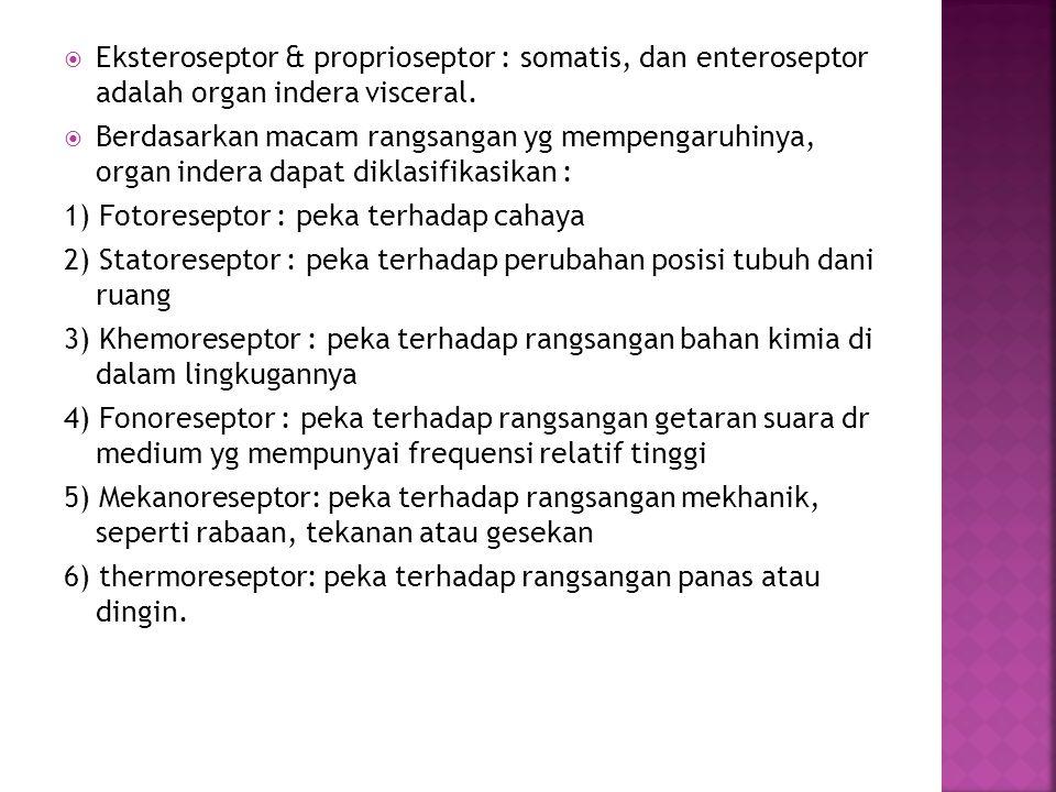  Eksteroseptor & proprioseptor : somatis, dan enteroseptor adalah organ indera visceral.  Berdasarkan macam rangsangan yg mempengaruhinya, organ ind