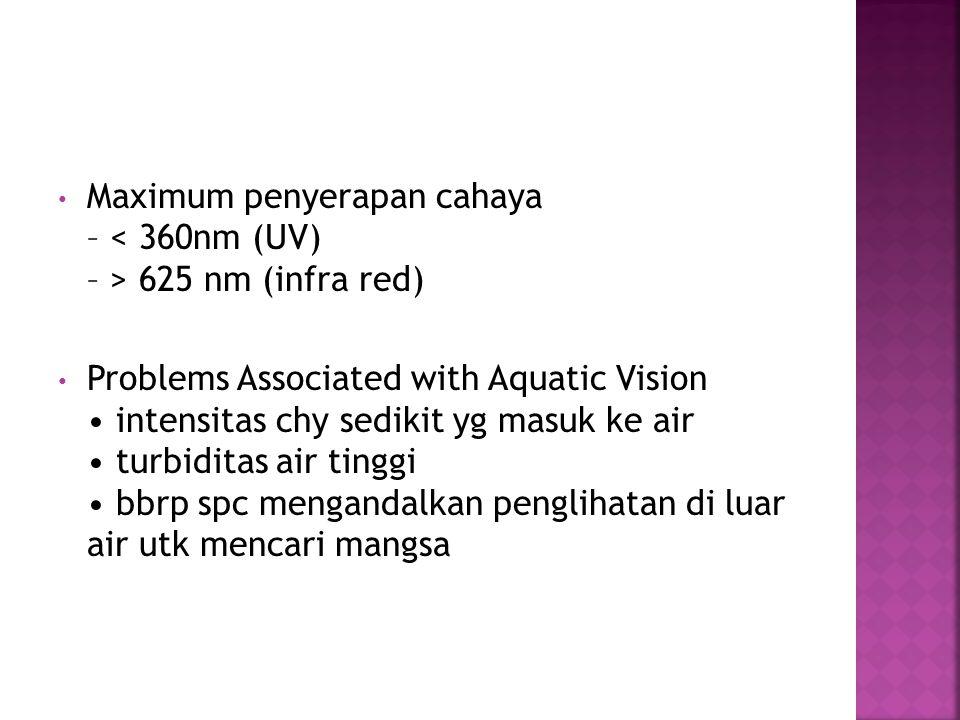 Maximum penyerapan cahaya – 625 nm (infra red) Problems Associated with Aquatic Vision intensitas chy sedikit yg masuk ke air turbiditas air tinggi bbrp spc mengandalkan penglihatan di luar air utk mencari mangsa