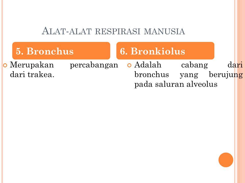 A LAT - ALAT RESPIRASI MANUSIA Terdapat di dalam kantung alveolus.
